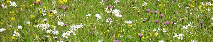 Wildflower & Meadow grass mixtures