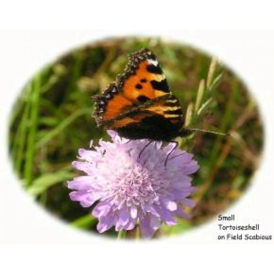Plant Plug selection to attract butterflies