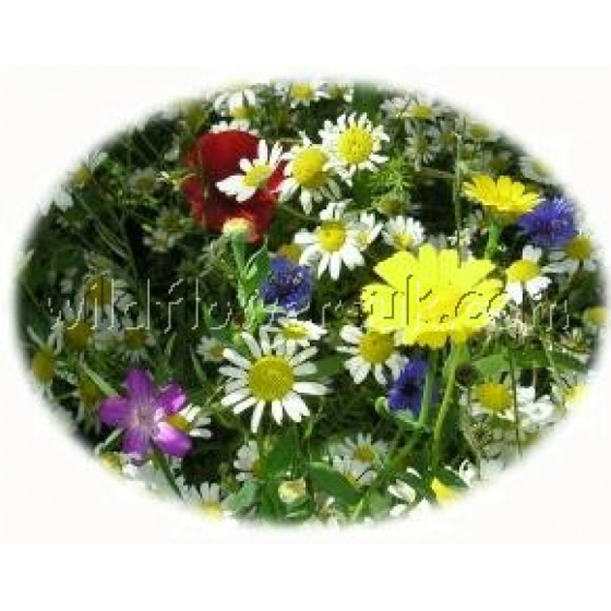 Miniature garden wildflower kit