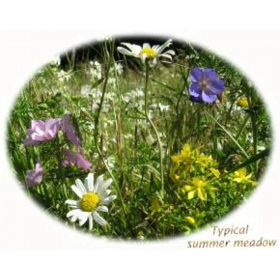 Summer Meadow Selection