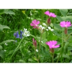 view Meadow mix for Woodland and Hedgerows -Wildflower and Grass mix details