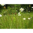 view details of Meadow mix for Pond Edges -Wildflower and Grass seed Mix