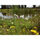 Meadow mix for Pond Edges -Wildflower and Grass seed Mix