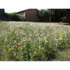Very Large garden wildflower kit