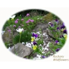 Rockeries Selection