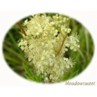 Scented Wild Flowers Selection