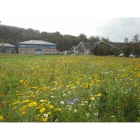 view details of Urban annual Wildflowers (100% wildflower mix)
