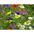 view details of Woodland and Hedgerow Wildflowers- 100% wild flower seed mix