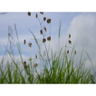 view details of Woodland and Hedgerow Meadow grass mix (100% Meadow Grass mix)