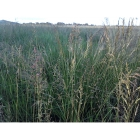 Wet Soil Meadow grass mix (100% Meadow Grass mix)