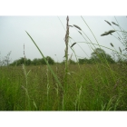 General purpose, Meadow grass mix (100% Meadow Grass mix)