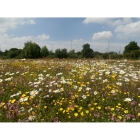 view Wild flowers for Clay Soils- 100% wild flower seed mix details