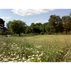Wildflowers for Fertile soils- 100% wild flower seed mix